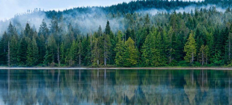Inspiration: как вышить елку